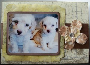 lisa-scruffy-pups