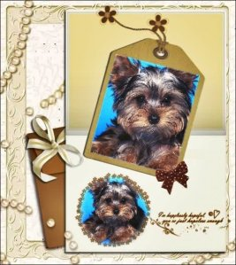 trudy-dog-card
