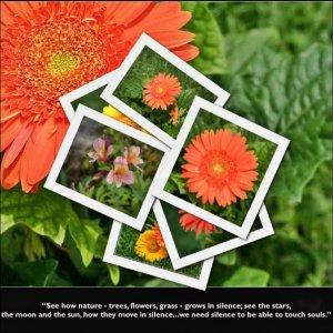 trudy-flowers1